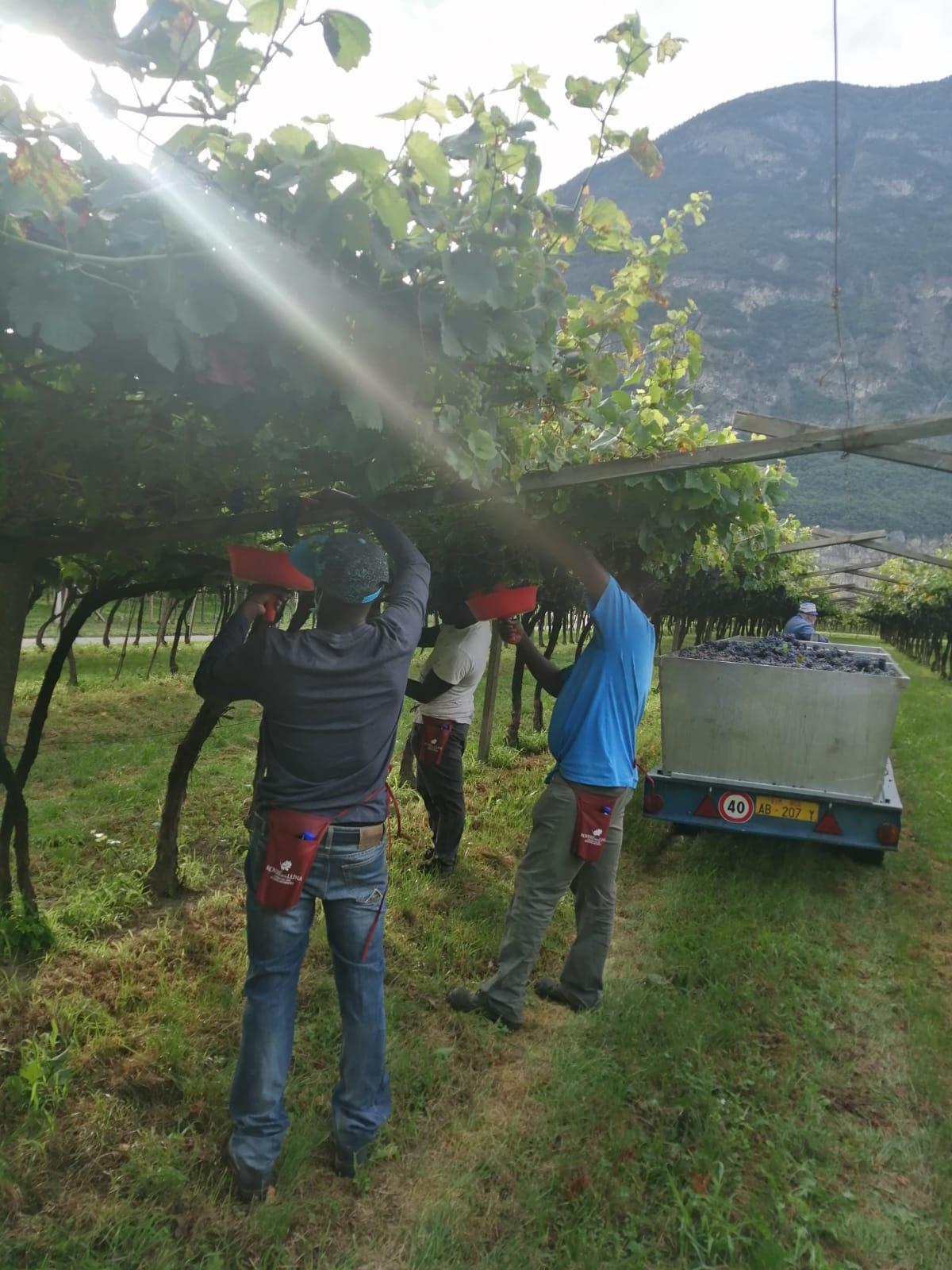 Da Casa Sankara al Trentino per la raccolta dell'uva